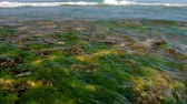 big waves : foaming ocean waves on horizon with blurry underwater plants on foreground slow motion. Concept tsunami impact and global warming