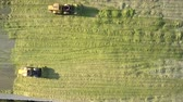 landbouwmachines : vertical view powerful special bulldozers tamp green corn silage in wide pit on sunny autumn day Stockvideo