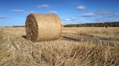 forragem : close view huge wheat straw roll in metal net shines in sunlight in field with scattered bales by forest under blue sky