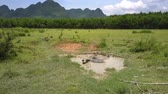 pasturage : large lazy water buffaloes rest in small puddle among field covered with grass against sky and mountains aerial view Stock Footage