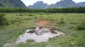 pasturage : little lake with bathing buffaloes on wide field against forest and large mountains bird eye view