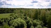 luxuriante : pictorial high forest trees surround green lush meadow under boundless blue sky with clouds in summer upper view. Concept unspoiled nature Vídeos