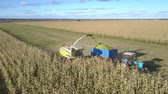 тележка : close motion above field yellow harvester chops corn stems and unloads into trailer among immense farmland