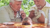 間違った : senior citizens examine cat with different colour eyes sitting at brown wooden table with hedgehog. Concept wrong examination 動画素材