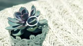 background : The svastic silver ring on the plant. The white serviette