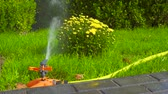 hosepipe : Sprinkler head of automatic watering the bush, grass and lawn. Spraying water over green grass. Irrigation system Stock Footage
