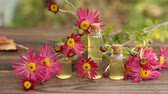 essência : chrysanthemum essential oil in bottle on table Stock Footage