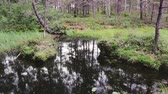 High definition footage of the swamp in the forest with a reflection of the trees. Wideo