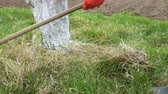 ancinho : The gardener rakes the old dry grass under the apple tree. Stock Footage
