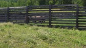 reddish : Horses of brown color stand in a wooden pen. Stock Footage
