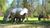 лошадиный : Horses graze in the woods in a glade brightly lit by the sun.