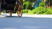 turysta : People ride a horse cart in a public park. Wideo