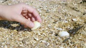 toplamak : A young man collects shells on the sea beach. Close up. Stok Video