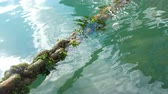 iszapos : Old rusty ship chain overgrown with algae in sea water.