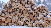 büyük : Big pile of wooden logs in the winter forest during a snowfall. Slow motion.