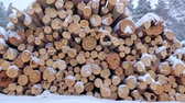 lumber industry : Big pile of wooden logs in the winter forest during a snowfall. Slow motion.