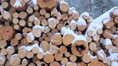 picada : Big pile of wooden logs in the winter forest during a snowfall. Slow motion.