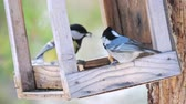 a major : Birds eat sunflower seeds from the feeders in the spring forest of a natural park.