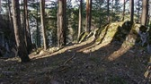 sella : steep Bank of a mountain river, pine forest, Ural, Siberia Stock Footage