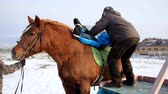 koňmo : Contact kids therapy and rehabilitation horseriding club - adult man with kids with cerebral palsy syndrome learn to ride a horse back and play with horses
