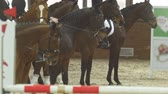 riders : Equestrian riders - participants of riding competition - on bay stallions in the equestrian arena