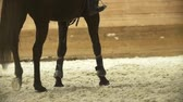 riders : Legs the black horse galloping at show jumping competition