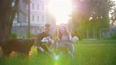 setter : Dog breed irish setter with husky playing on the grass and young couple having a rest at summer sunset