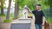 engedelmes : Young man trains husky dog on the overpass on playground in summer park