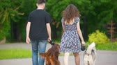 setter : Family couple with pets dogs walking in park - man and woman walks with irish setter and husky Stock Footage