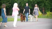 setter : Man and woman - family couple with pets dogs walking in park - irish setter and husky - slow-motion