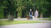 setter : Couple with pets walking in park - man and woman walks with irish setter and husky Stock Footage