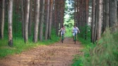 önlem : Happy couple cycling on the path in the pine forest Stok Video