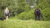 pony : Brown horses eating grass and walking at rural field. Woman watching them