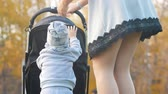 oddanost : Young mother rolls a baby carriage, her son tries to get into it
