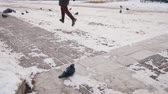 piccione : A pigeons walking around. A man runs alongside. Pigeons flies away
