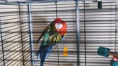 papagaio : A beautiful colorful parrot in the cage.