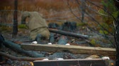 ozbrojený : Dead soldier lying on the iron wire - piece of log on a foreground