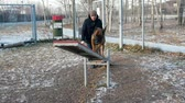 cane pastore : A german shepherd dog running on the swing Filmati Stock