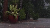 звук : a heavy downpour in tropical florida. View of large potted plant and trees along driveway during tropical rainstorn in Naples Florida, street can be seen flooding, with audio.