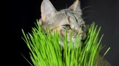 Cat eating fresh green grass againstbackground