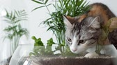 başlık : A pet cat sniffs green plants in glass pots under covers. Home garden, protected by glass lids.