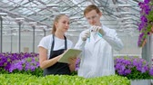 analyzing : A young man and woman in white coats and black aprons, scientists, biologists examine and analyze flowers and green plants in greenhouse. Mix liquid in test tubes. Selection and care of plants.