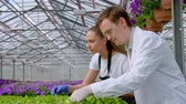 panoya : A young man and woman in white coats and black aprons, scientists, biologists or agronomists examine and analyze flowers and green plants in the greenhouse. Selection and care of plants. Stok Video