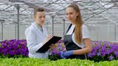 analyzing : Two women in white coats and black aprons. Scientists, biologists or agronomists examine and analyze flowers and green plants in the greenhouse. Write data to the tablet. Selection and care of plants.