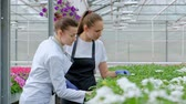 panoya : Two women in white coats and black aprons. Scientists, biologists or agronomists examine and analyze flowers and green plants in the greenhouse. Write data to the tablet. Selection and care of plants.