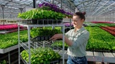 analyzing : A young woman agronomist or greenhouse worker in a plaid shirt carries a cart with green plants in pallets for sale. Many flowers. Stock Footage