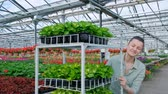 analyzing : Agronomists and farmers are inspecting plants In a greenhouse farm with a laptop, farmers and researchers in the analysis of the plant. agricultural technology concepts. Stock Footage