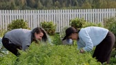 backyard : Two young beautiful girls in sweaters are caring in the garden. Harvest. The concept of natural economy and the cultivation of organic vegetables. Stock Footage