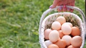 фартук : Many chicken eggs are in the basket in the hands of a woman farm. On the background of green grass. Стоковые видеозаписи