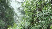 america : Rain in the Woods Stock Footage